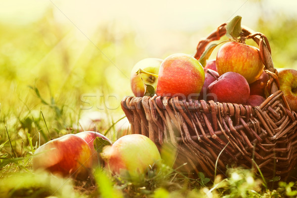 Foto stock: Organic apples in summer grass